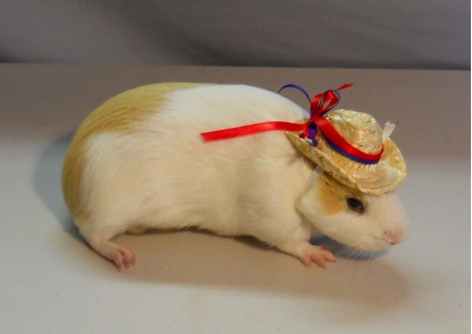 Damsel Straw Cowboy Hat with 4th July Ribbons 2